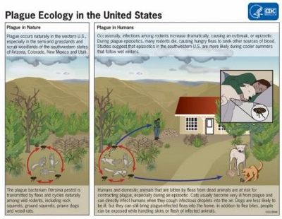 CDC: Plague ecology in the United States